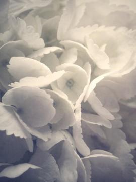 juliette_chretien_en_fleur_02